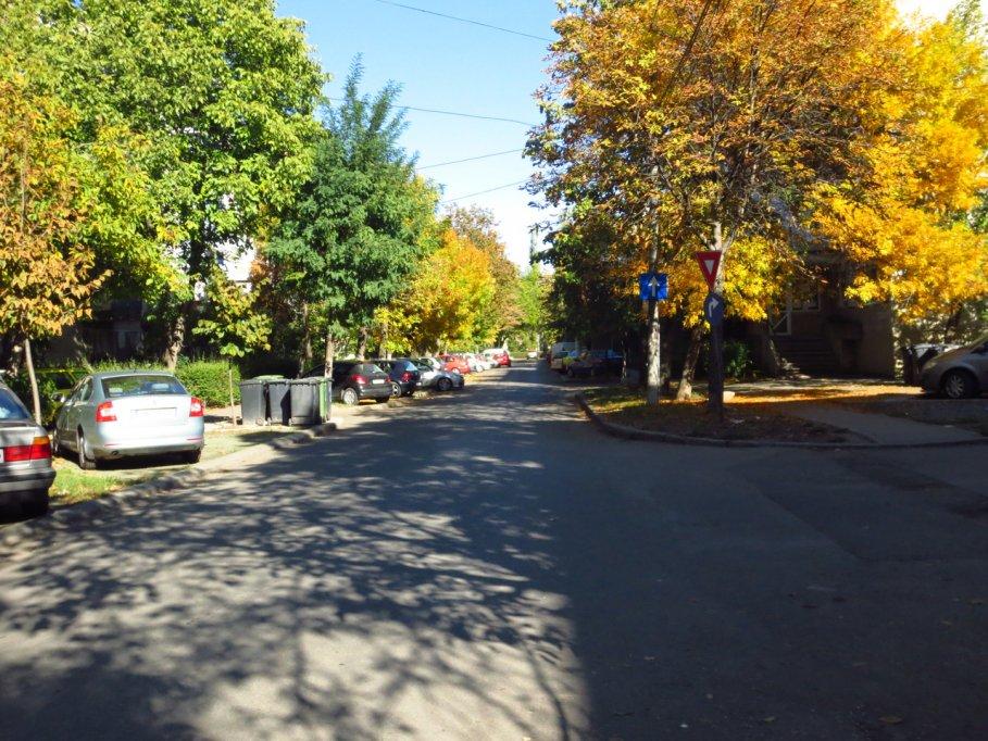 Strada Teiului din Timisoara 2
