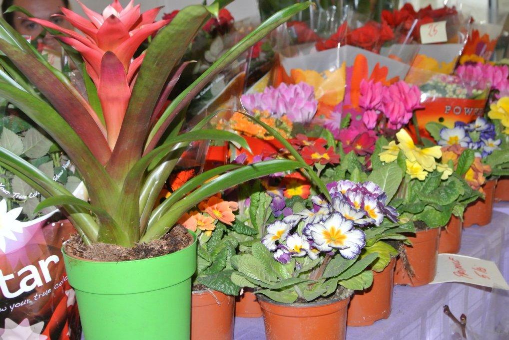 Targul Cadourilor de Primavara 6-10.03.2012