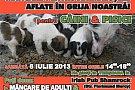 Doneaza mancare pentru animalute gazduite de ACT