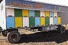 Pavilion apicol