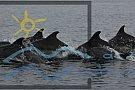 """Campania nationala """"Adopta un delfin"""" - Fii si tu parintele adoptiv al unui delfin din Marea Neagra!"""