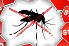 Plase insecte / tantari