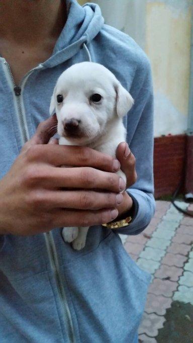 Ofer spre adopție 2 cățelușe