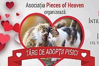 Târg de adopții pisici