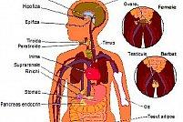 Doctor endocrinolog in Timisoara