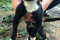 Adoptie gratuita pisicuta