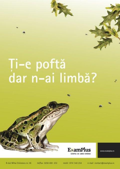 Curs de limba engleza incepatori - ExamPlus
