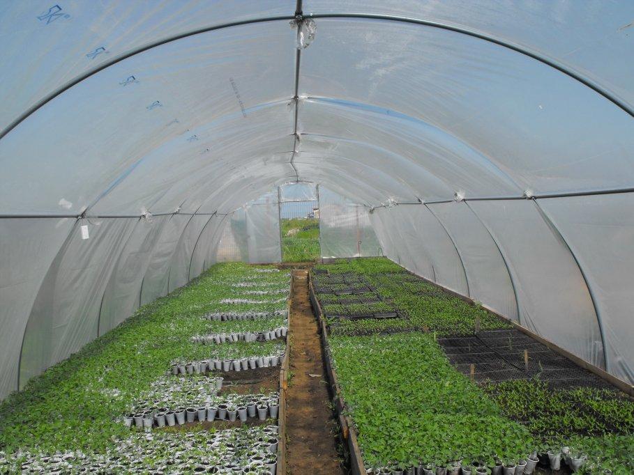 Solarii (kit complet)pentru legume