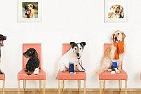 Angajam personal pentru clinica veterinara, Timisoara