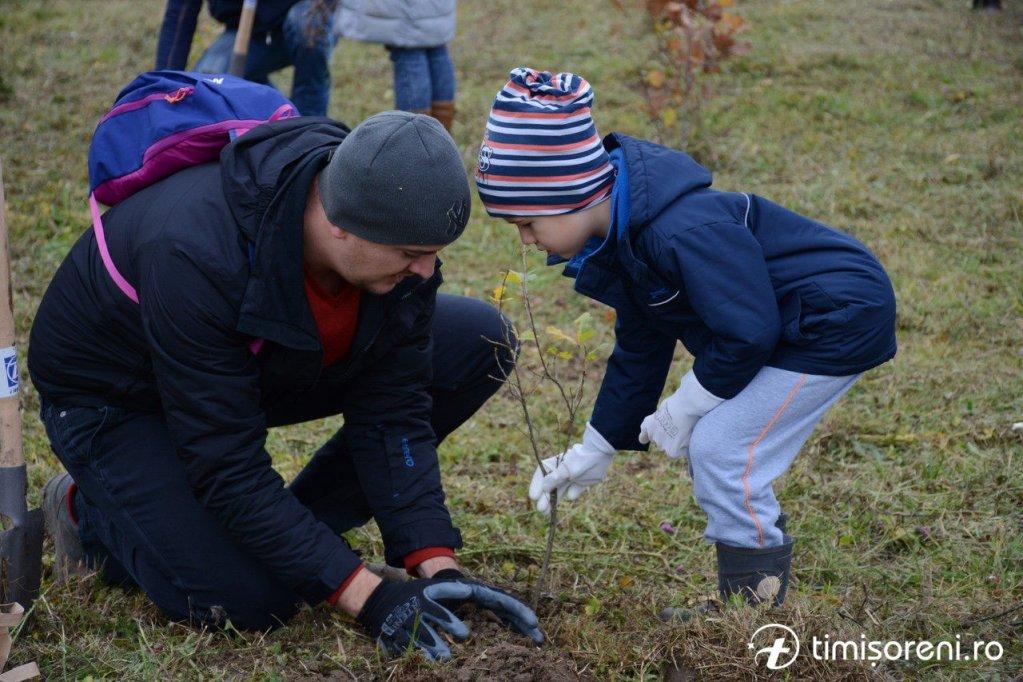 S-au plantat fapte bune în perdeaua de protecție forestieră de la Sînmihau Român
