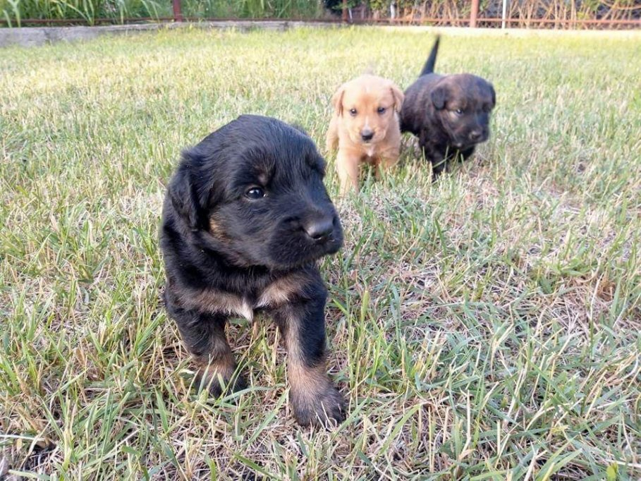GRATIS! Sweet puppies looking for a place to call home