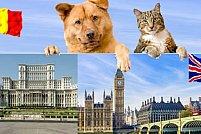 Marea Britanie paraseste UE, dar transportul de caini si pisici spre Anglia este in continuare posibil