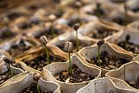 5 investiții în agricultură pe care ar trebui să le faci