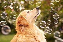 3 lucruri care aduc fericire animalului tau de companie