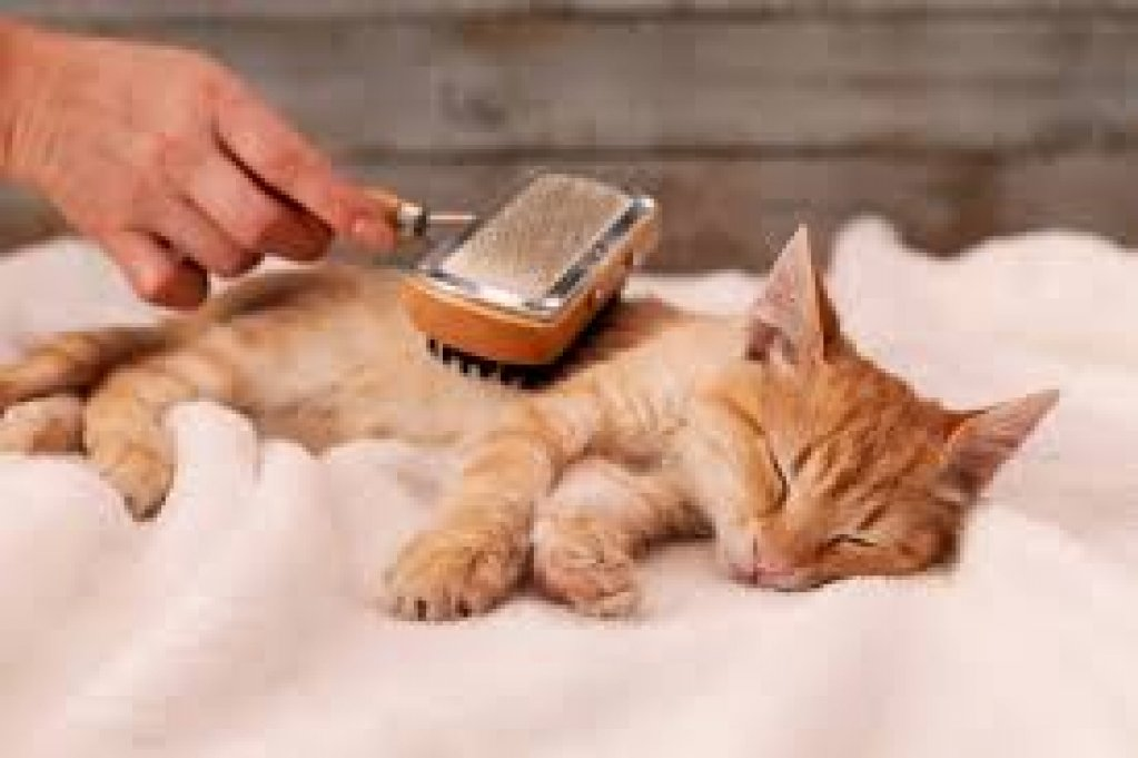 Frizerie pentru pisici – Răsfaț pentru pisicuța ta