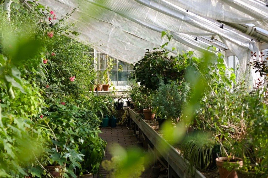 Protejarea plantelor din gradină împotriva dăunătorilor și factorilor climatici