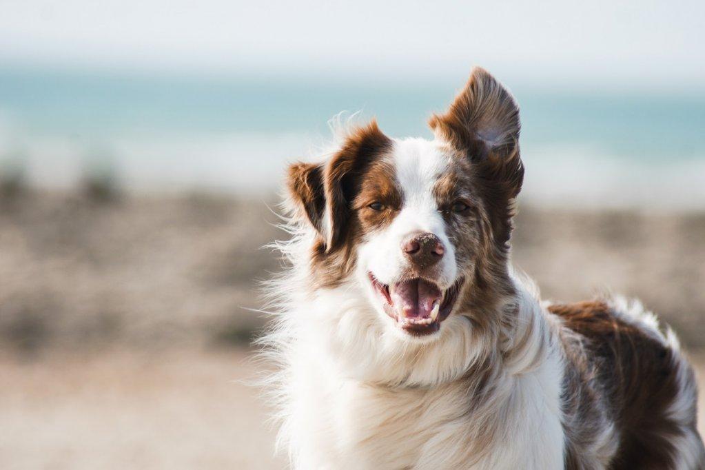 Alimentația câinilor: reguli de care să ții cont