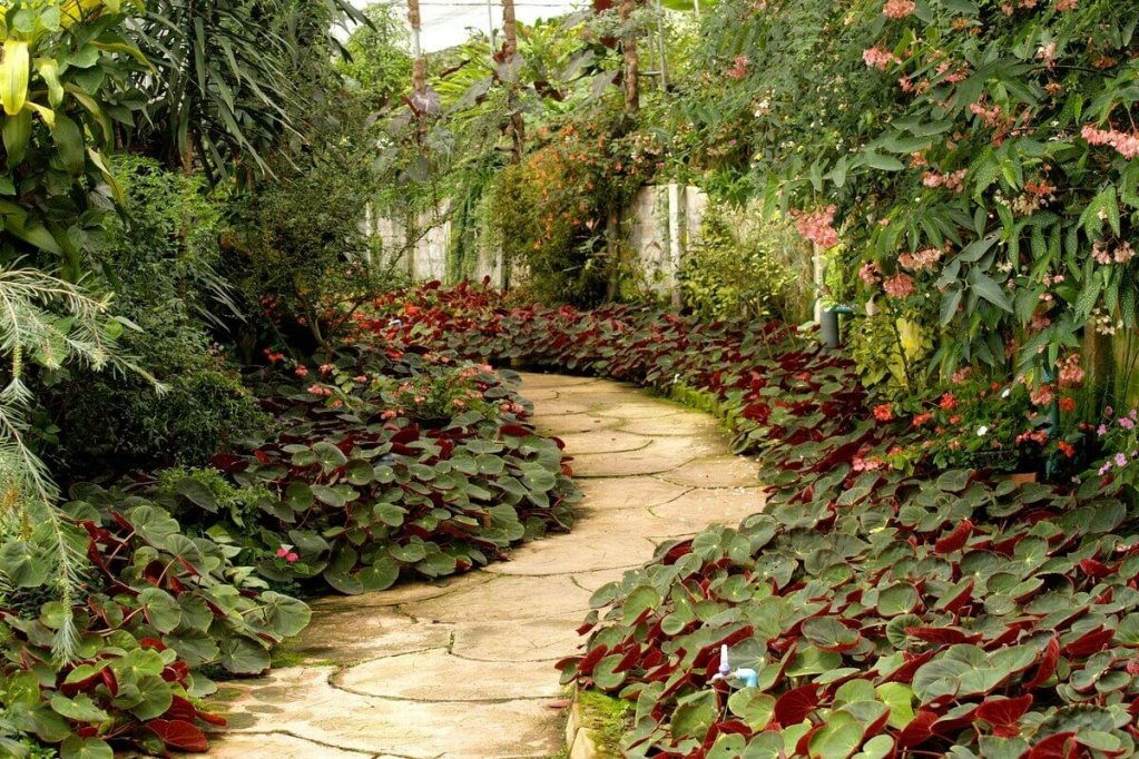 Îți dorești să ai o grădină diversificată? Iată TOP 4 lucruri de care să ții cont pentru un spațiu verde de invidiat!