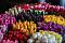 lalele colorate