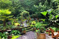 Cum să-ți transformi grădina într-o oază?