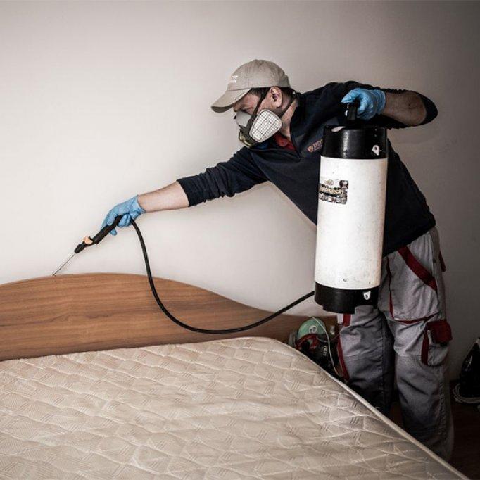 Scapa de insecte cu cele mai bune servicii de dezinsectie