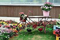 Sfaturi și idei pentru amenajarea grădinii