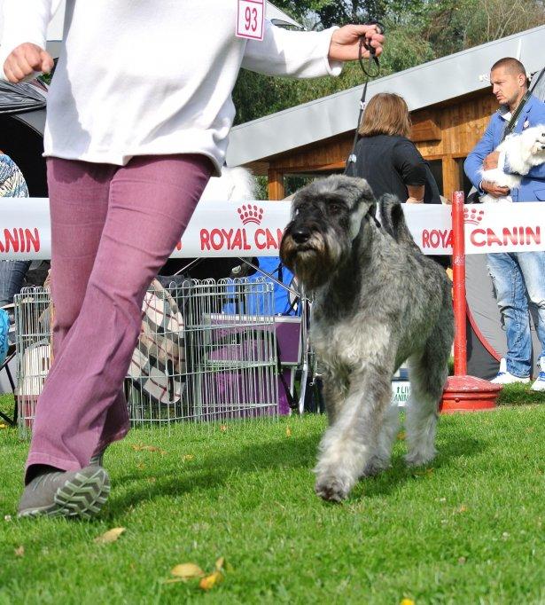 Cupa Transilvaniei - 28 Septembrie 2013 - Ziua 1