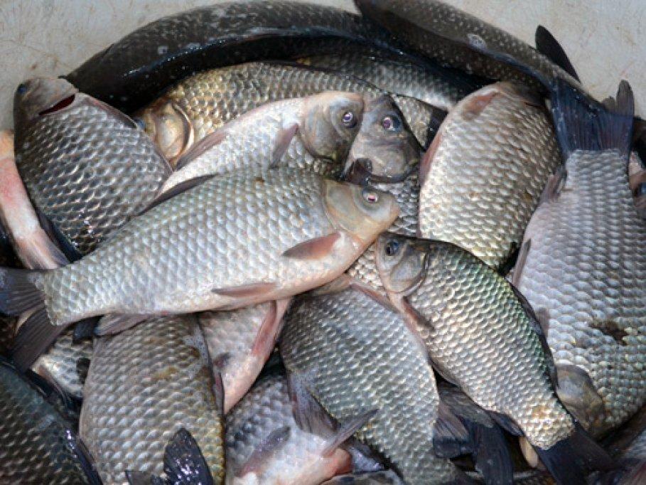 Infracţiuni de braconaj piscicol sesizate de jandarmi