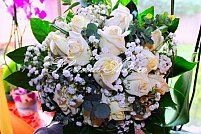Floraria Adi