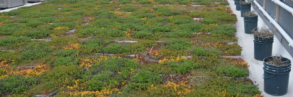 Descopera un nou trend: acoperis terasa verde pentru rezidente prietenoase cu mediul