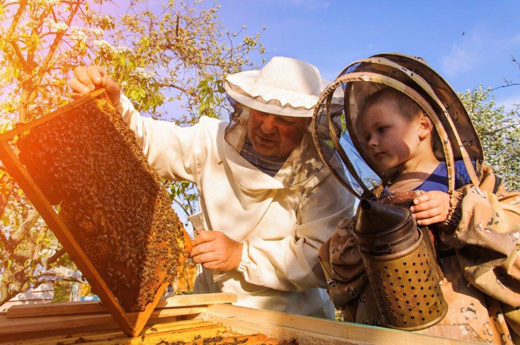 Care sunt cei mai importanti pasi de urmat pentru a deveni un apicultor de succes?