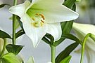 Floraria Iris - Academiei