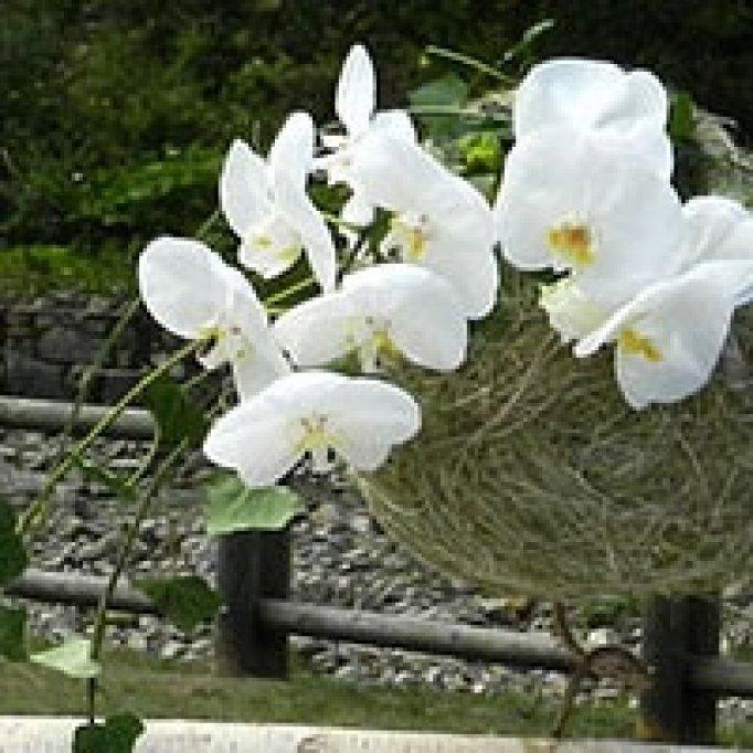 Floraria Iris - Vasile Lascar