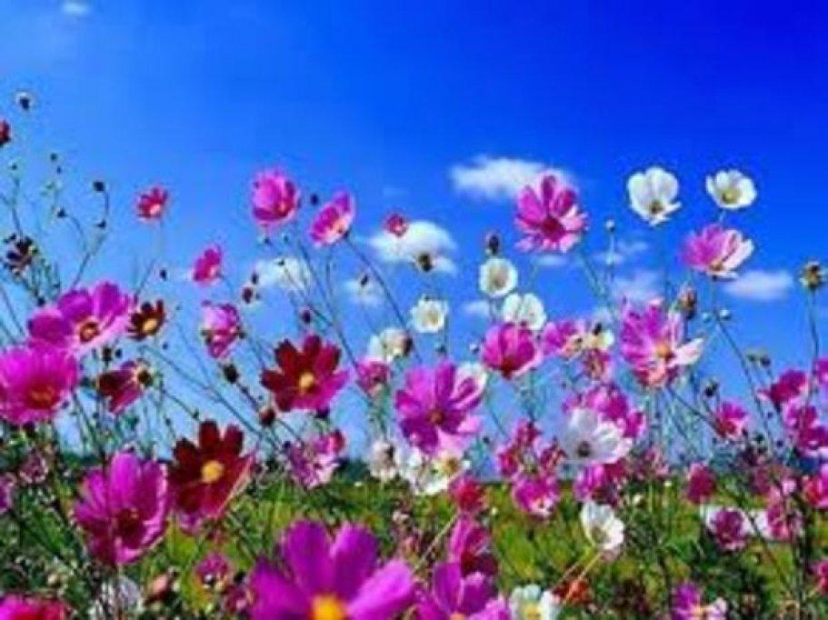 Parcul Lunca Florilor