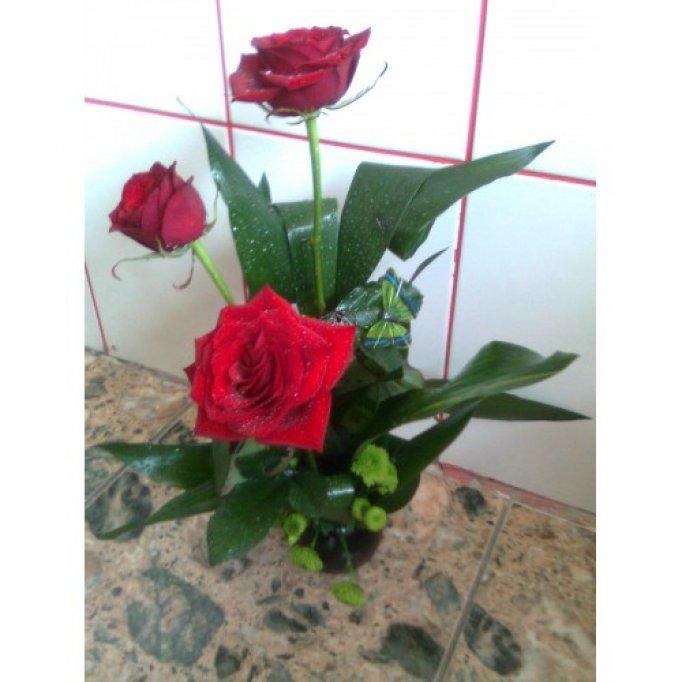 Floraria Sentiment