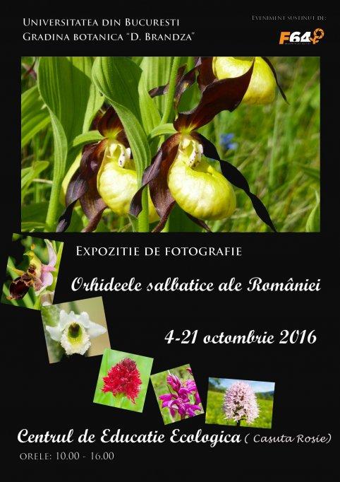 Orhideele sălbatice ale României (expozitie foto)