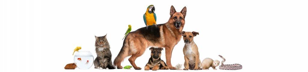 Pet shop online cu produse la cele mai inalte standarde, pe petshopexpres.ro