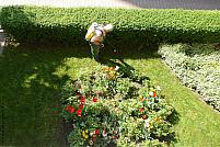 Pentru pasionații de grădinărit: 6 moduri de a-ți întreține gradina