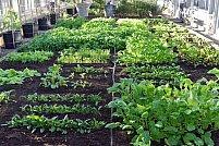 Culturile de legume, ocupatia care asigura dintotdeauna hrana romanilor