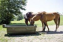 Cum tinem sub control stresul termic pe care animalele din ferma il resimt