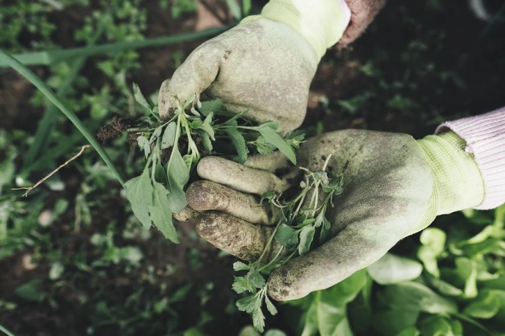 Idei simple pentru a-ți ușura munca în grădină