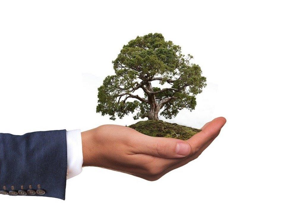 Legislaţie şi Prevederi Pentru Ambalajele Biodegradabile