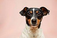 De ce trebuie să ții cont, înainte să adopți un câine?