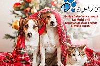 Clinica veterinara Daisy Vet - Aviatiei
