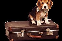 Ringstar Pet Hotel