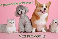 Petmax.ro - un rasfat pentru animalele de companie