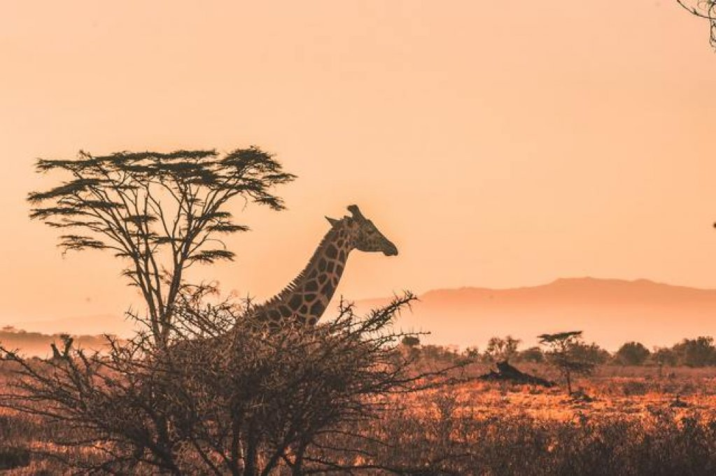 Kenya, locul ideal pentru aventură și relaxare