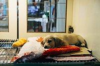 Cele mai frecvente urgențe veterinare și ce să faci în astfel de situații