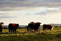 5 aspecte de care să ții cont când vrei să-ți deschizi o mică fermă