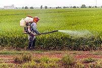 Afla cum sa te ocupi eficient si rapid de combaterea furnicilor